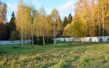 Лесной парк