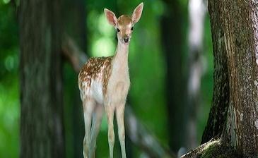 «Изумрудный» находится в неповторимом месте, где чистый и целебный  горный воздух, а так же красота лесного заповедника имеет притягивающую силу.