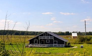Лесная поляна-2