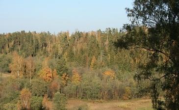 Природное окружение поселка