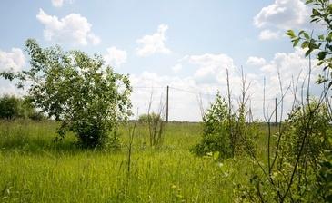 Костинский лес