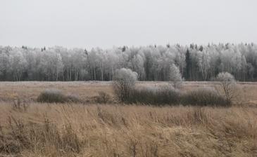 Лесной массив, по границе коттеджного поселка