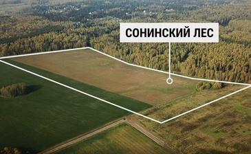 Сонинский Лес